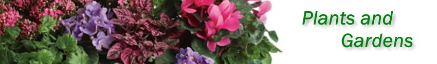 Green plants, blooming plants and dish gardens delivered in St. Augustine from Flowers by Shirley